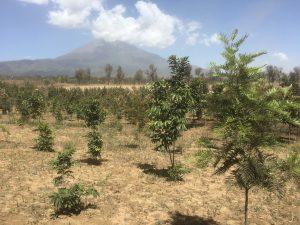 Hiilidioksidipäästöjä voidaan kompensoida istuttamalla puita.