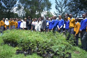 Plant a tree as a gift in Mringa, Tanzania.