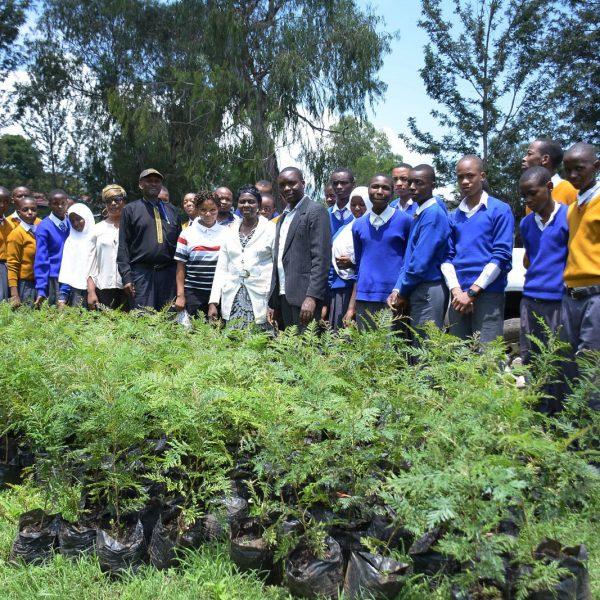 Planting trees mringa