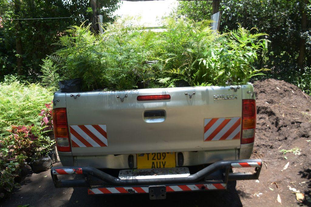 Auton päästöjen vähentäminen puita istuttamalla, auton lavalla puutaimia.